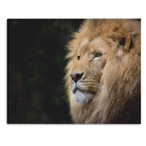 Canvas Leeuw op de uitkijk