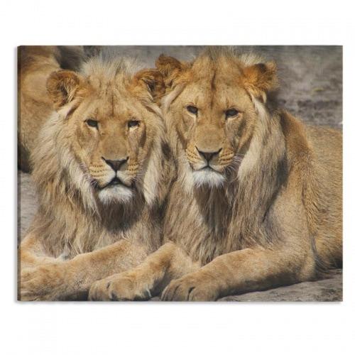Canvas Leeuwenvrienden