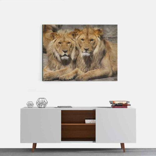 Canvas Leeuwenvrienden 2