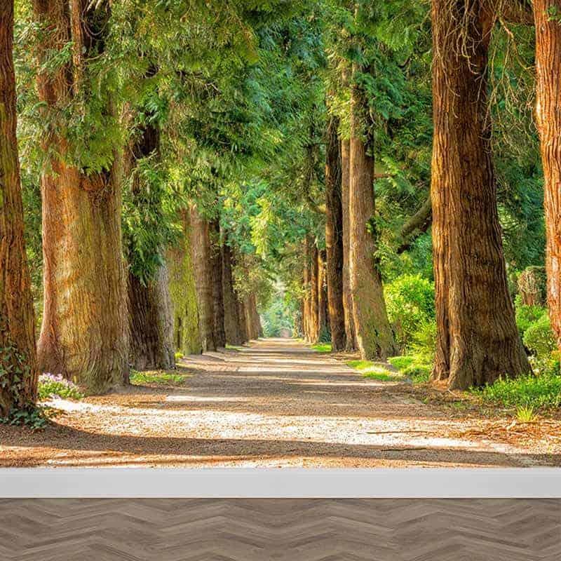 Fotobehang Laan met bomen
