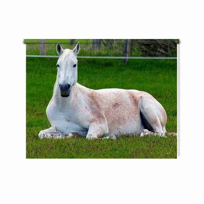 Rolgordijn liggend paard