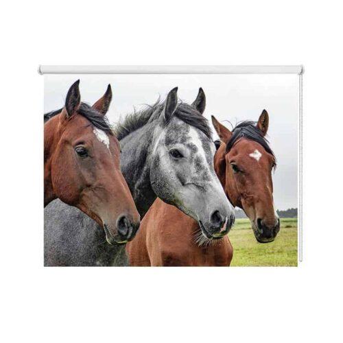 Rolgordijn paardenkoppel