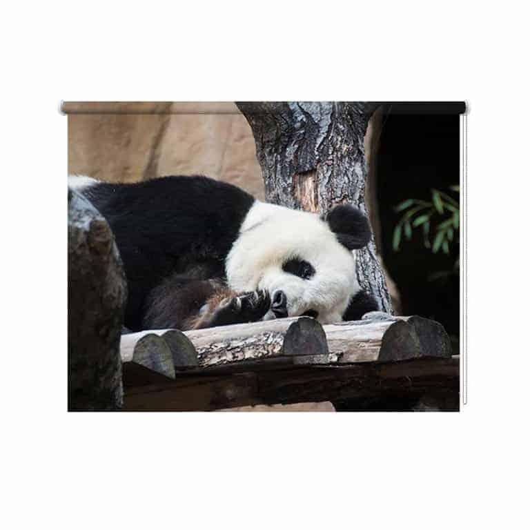 Rolgordijn luie panda