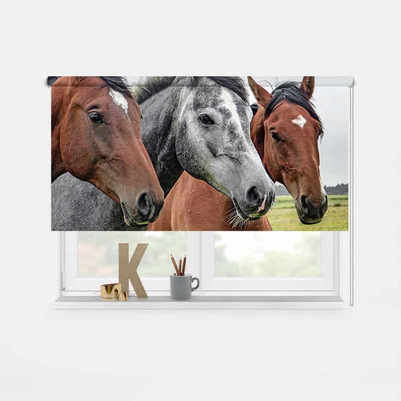 Rolgordijn paardenkoppel 2