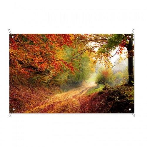Tuinposter Bospaadje in de herfst