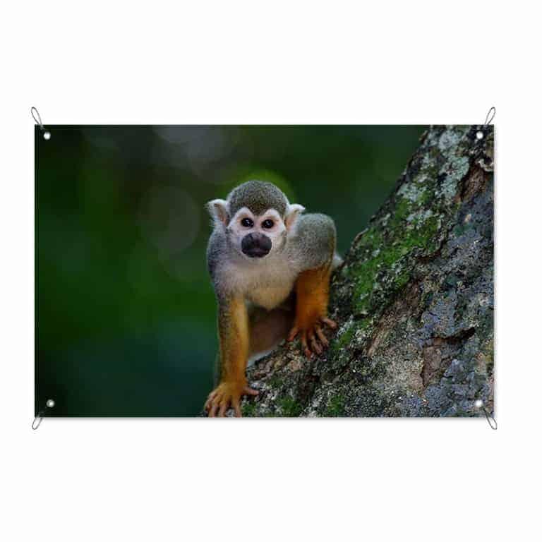 tuinposter Klein aapje