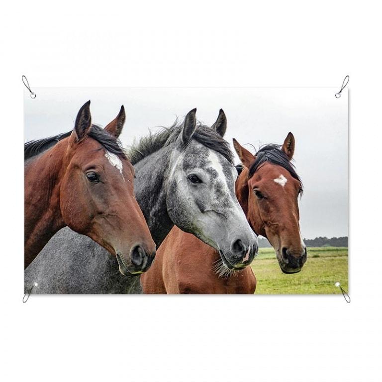 tuinposter paarden