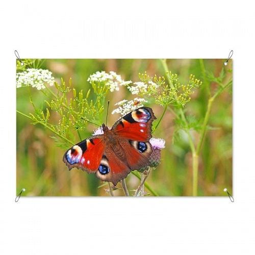 Tuinposter Rode vlinder