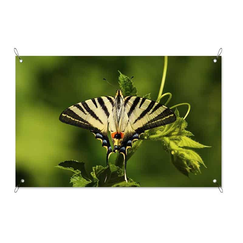 Tuinposter gele vlinder