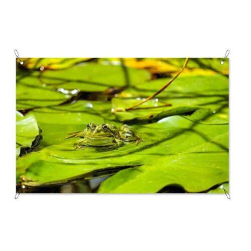 Tuinposter Kikker op waterlelies