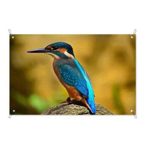 Tuinposter IJsvogel