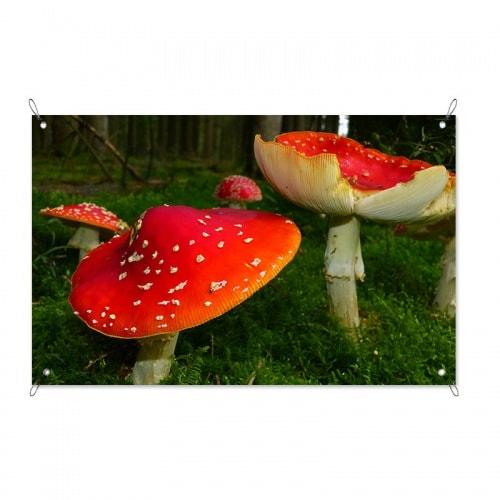 Tuinposter Rode paddenstoelen