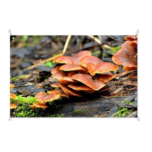 Tuinposter paddenstoelen