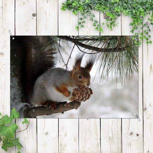 Tuinposter Eekhoorn met eikeltje