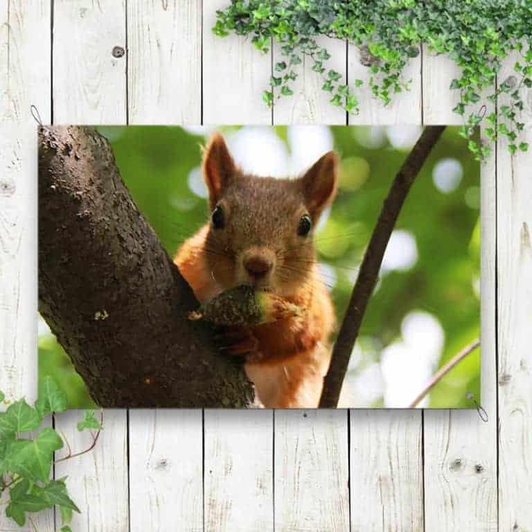 Tuinposter Eekhoorntje 1