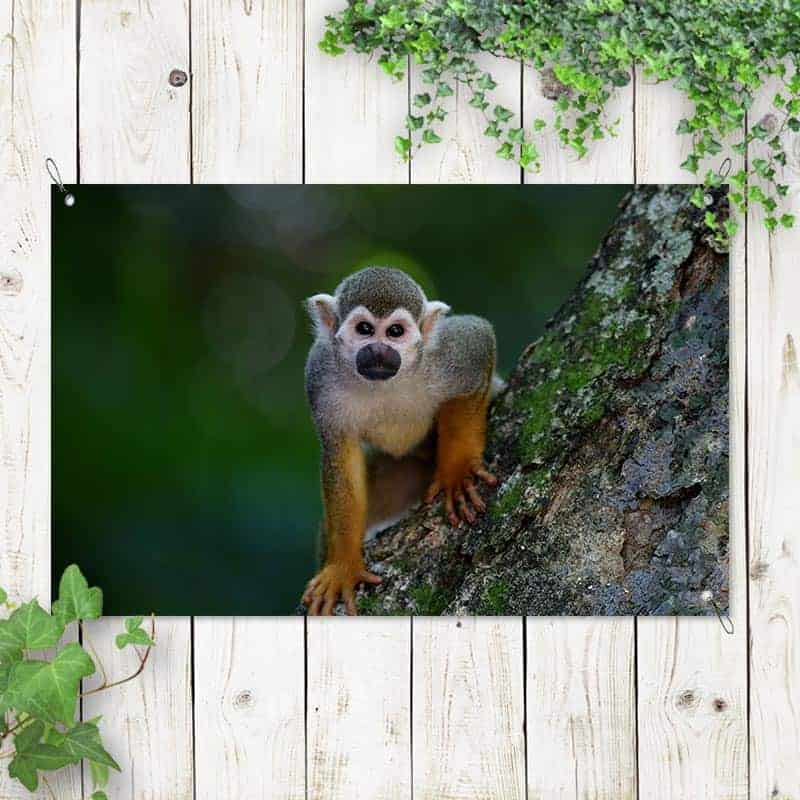 tuinposter Klein aapje 1
