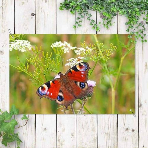 Tuinposter Rode vlinder 1