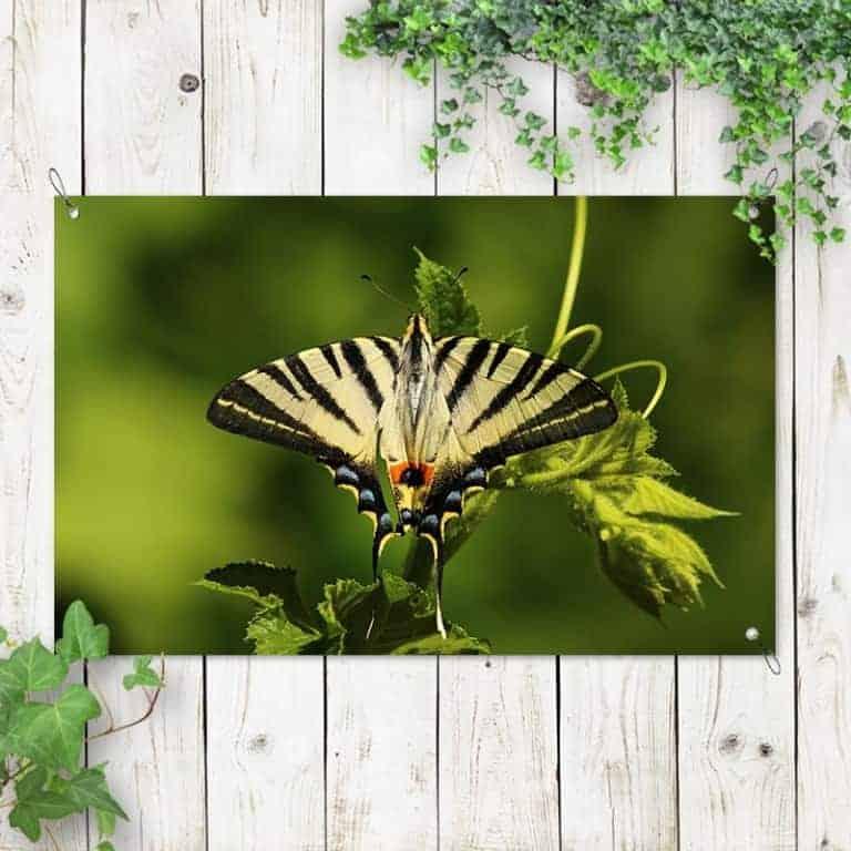 Tuinposter gele vlinder 1