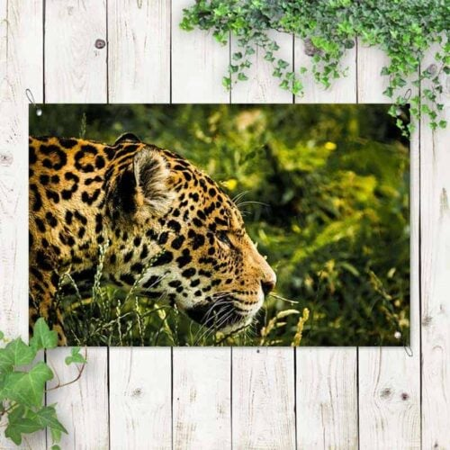 Tuinposter Luipaard 1