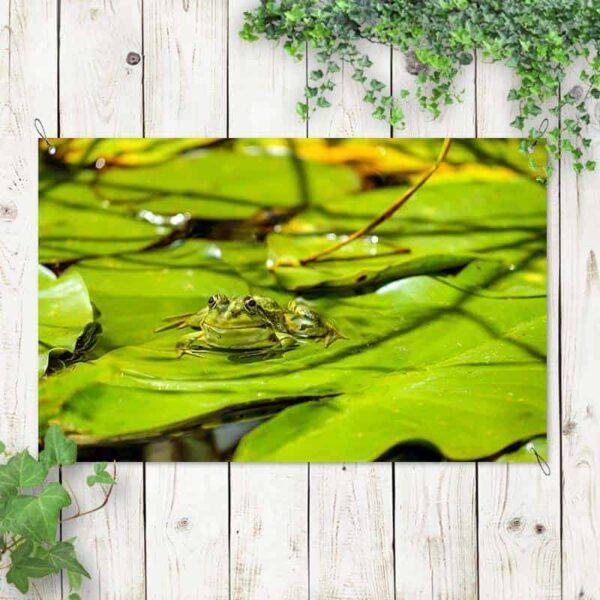 Tuinposter Kikker op waterlelies 1