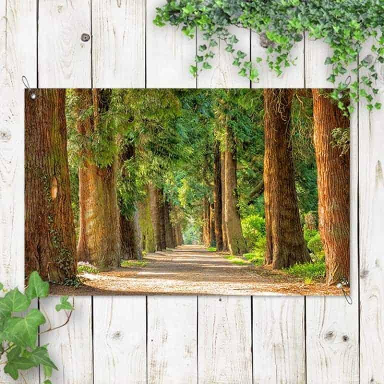 Tuinposter Laan met bomen 1