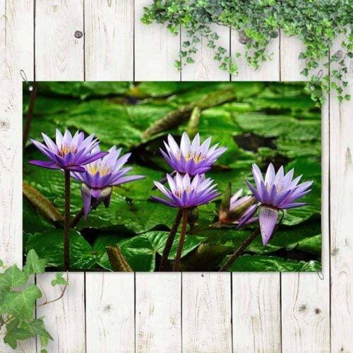 Tuinposter Blauwe lotus 1