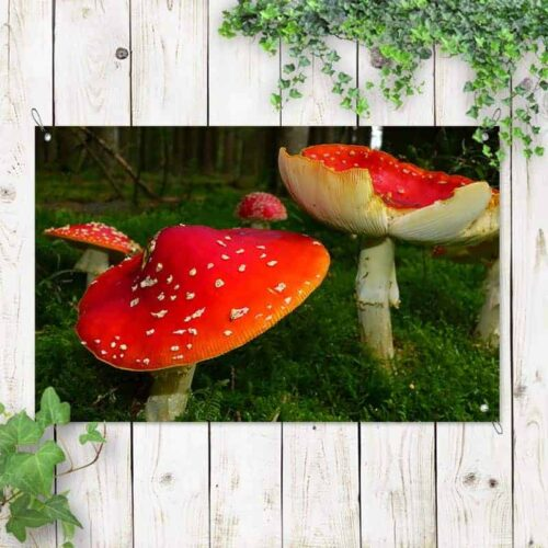 Tuinposter Rode paddenstoel 1