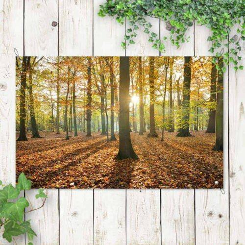 Tuinposter Bos in herfstkleuren 2