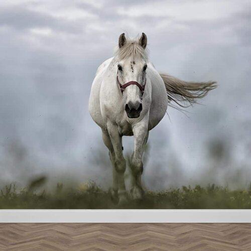 Fotobehang Wit paard