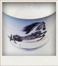 lampenkap steigerend paard voorbeeld