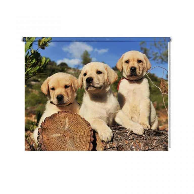 Rolgordijn Labrador pups