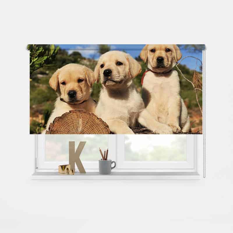 Rolgordijn Labrador pups 1
