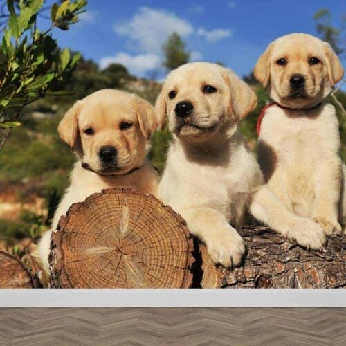 Fotobehang Labrador pups