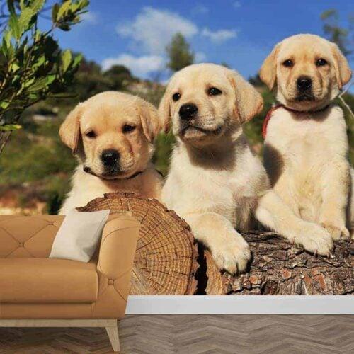 Fotobehang Labrador pups 1