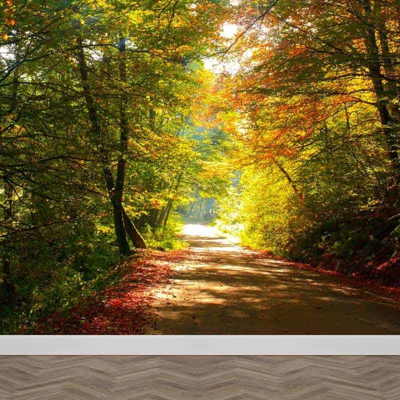 Fotobehang kleurrijk bospad