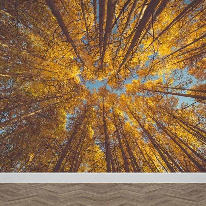 Fotobehang kijk naar boven