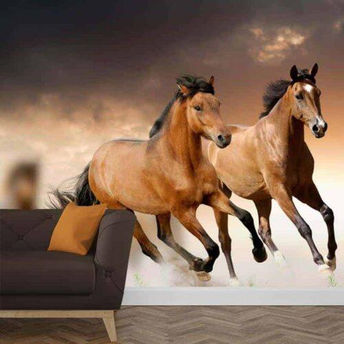 Fotobehang Paarden 1