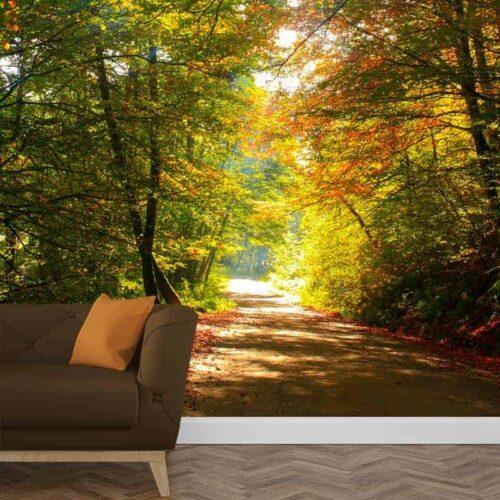Fotobehang kleurrijk bospad 1