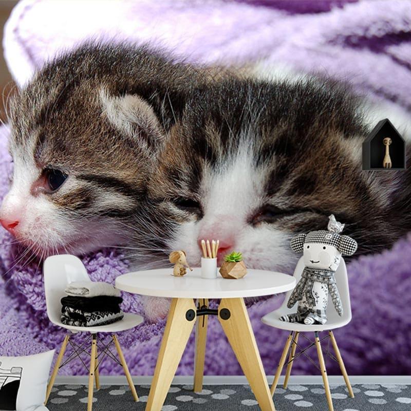 Fotobehang schattige kittens