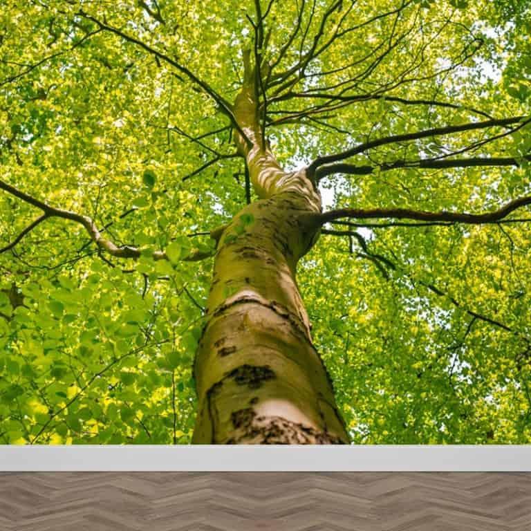 Fotobehang lenteboom
