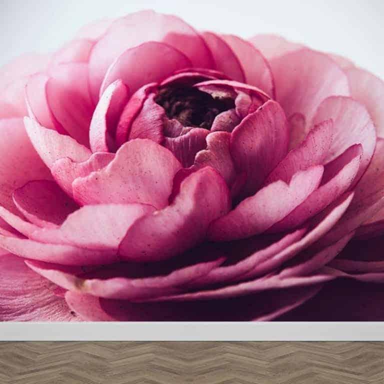 Fotobehang roze pioenroos