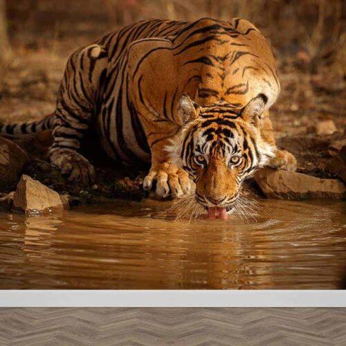 Fotobehang drinkende tijger