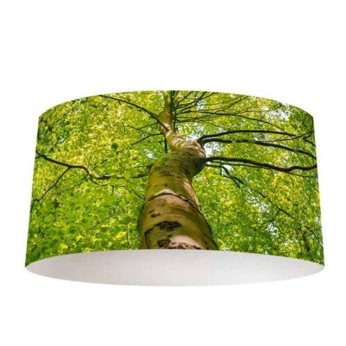 Lampenkap lenteboom