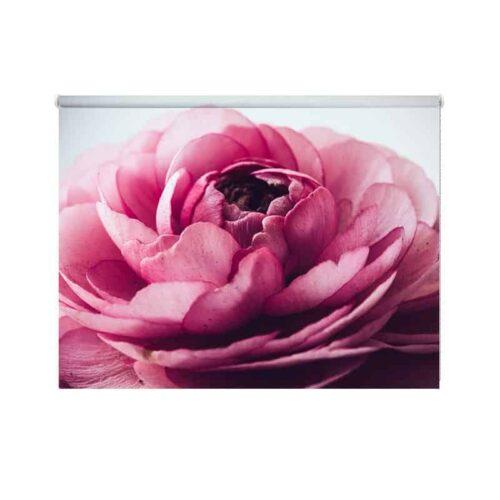 Rolgordijn Roze pioenroos