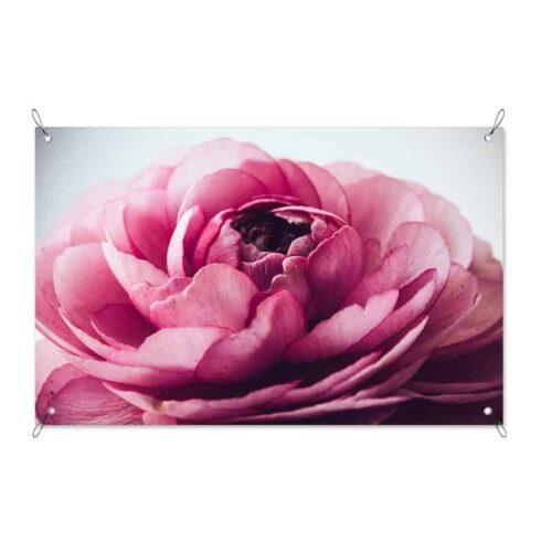 Tuinposter Roze pioenroos
