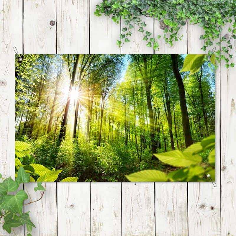 tuinposter zonnig bos