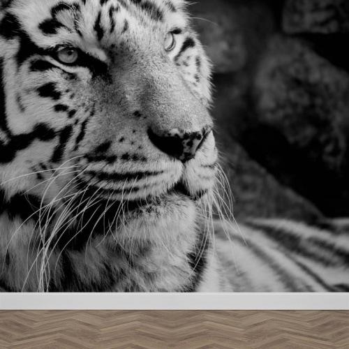 Fotobehang tijger zwartwit