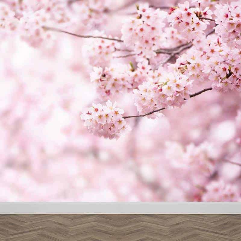Fotobehang Japanse kers