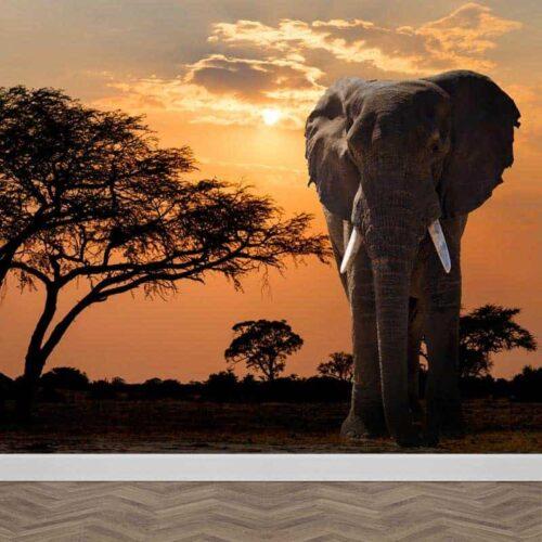 fotobehang olifant in avondschemer
