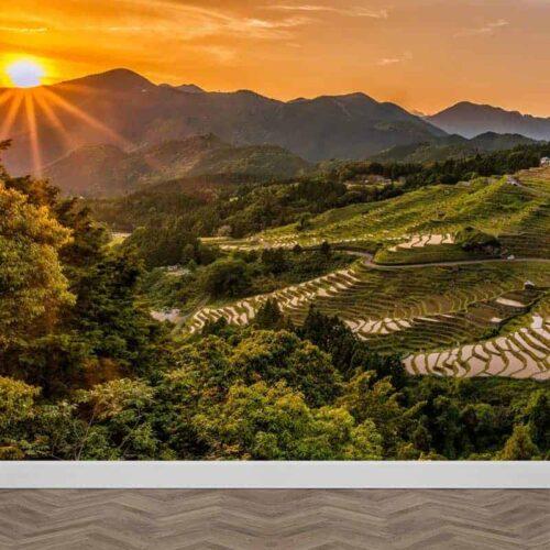 Fotobehang rijstplantage